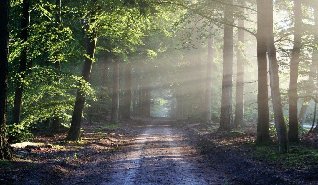 Zijnsoriëntatie, Pad van Levenskunst | Vind jouw Boeddha-natuur